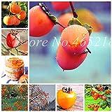 SONIRY 10 PC/Bolso exótico Bonsai Caqui árbol de Frutas al Aire Libre Ebenaceae Juicy Maceta Diospyros Kaki Fruta Planta Inicio Tiesto: Mixta