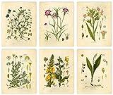 Ink Inc Botanical Prints Wildflower Prints Floral Wall Art - Set of 6-8x10 - Matte - Unframed Flower Art