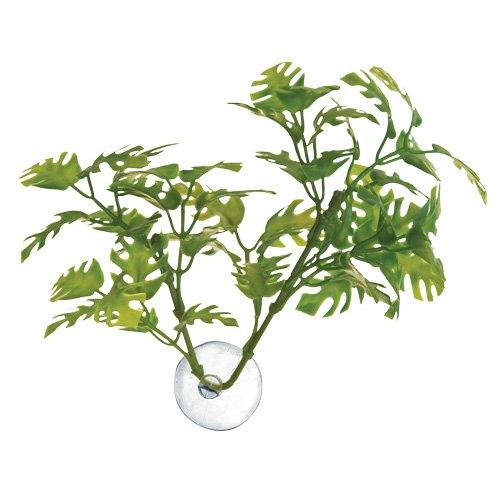 Zoomed Betta Plante Window Leaf pour Reptile/Amphibien