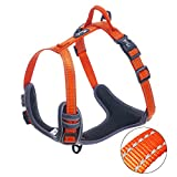 PETTOM Harnais Chien Anti Traction Rembourr Rglable avec Bande Rflchissante(XS Orange)