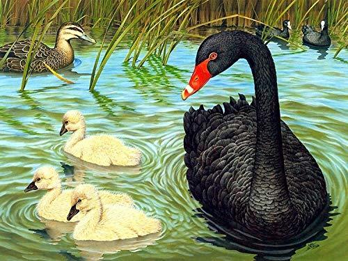 Louneu Big Black Duck DIY Painting Digital 24 Color Pigment Painting Painting Art Hand-Painted Creative Digital Oil Painting -40X50Cm-Framed