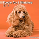 Toy & Miniature Poodle 2014 Wall Calendar