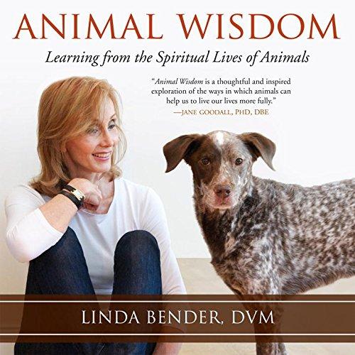 『Animal Wisdom』のカバーアート