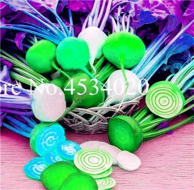 Pinkdose Bonsai 100 piezas Remolacha flores Verde Vegetal Beta ...