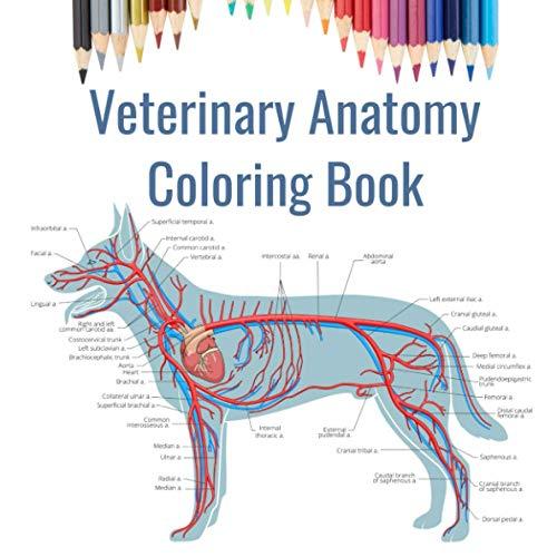 Veterinary Anatomy Coloring Book, 2e: 9781455776849: Medicine & Health  Science Books @ Amazon.com