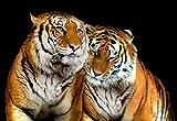 Olimpia Design 130P4 Fototapete Photomural Tiger