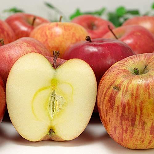 【家庭用・小玉】 有機 りんご ふじ 1kg 有機JAS (青森県 和楽堂養生農苑) ふるさと21