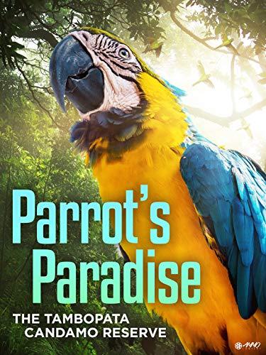 Parrot's Paradise