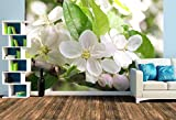 Premium Foto-Tapete Apfelblüten (versch. Größen) (Size L | 372 x 248 cm) Design-Tapete, Wand-Tapete, Wand-Dekoration, Photo-Tapete, Markenqualität von ERFURT