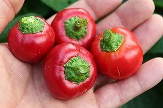 Sweet Piquante Peppadew Pepper 40+ Fresh Organic Seeds for The 2019 Season