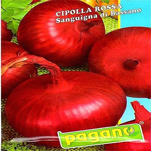Shopmeeko 200 Riesen-Zwiebelpflanzen Gelb Sweet Spanish Gemüsepflanzen Keimung 95{05d59a247c87d01d083807eccb4fe6e772522dd9c0f10b16b6bff3d497813698} + Blutrote Zwiebelpflanzen für Garten-Bonsai-Semillas: Rot