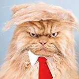 FMJI Trump Style Pet Costume Cat Wig - Donald Dog Clothes with Collar & Tie Head Wear Apparel Toy for Halloween, Christmas, Parties, Festivals