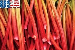 20 Seeds USA Seller Glaskins Perpetual Rhubarb 20- seedsHEIRLOOM Non GMO