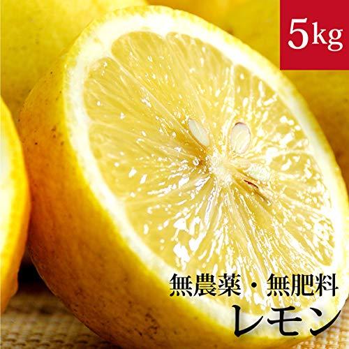 高木博士の樹上完熟レモン 5kg 自然栽培(無農薬・無肥料) 愛媛県産