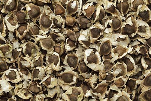 Moringa oleifera - 10 Samen - Meerrettichbaum !