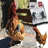 Longgaohui Chicken Arms zum Anziehen von Hühnern Gag Geschenk, Original T-Rex Arms für Huhn zum...