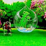 Skyeye Jarrón de Cristal Colgante Decorativo Decoración Hidropónica Decorativa de la Boda del Florero de la Bola de la Flor