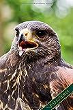 Falknerei: Wüstenbussard, Harris Hawk. Format A5, 120 Seiten, dezent grau liniert. Tageseintragungen, Notizen und Journal, Merkheft und Ideensammlung ... die Falknerin, Natur- und Vogelfreunde.