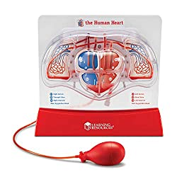The Human Heart by learning Resources