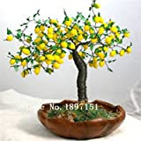 Semillas de Big Bonsai árbol de limón de supervivencia alta tasa de semillas de árboles de frutas para el hogar Gatden patio trasero (50pieces)