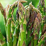 50+ Seeds of Heirloom Asparagus Officinalis - 'Mary Washington' Asparagus. Easy to Grow, Tasty Perennial that yields for Years!
