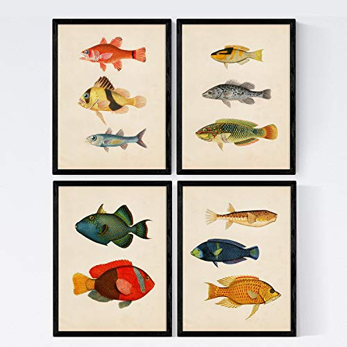Nacnic Set 4 Blatt Fisch Jahrgang bunten Effekt. Mittelmeer. Zusammensetzung von 11 verschiedenen Fischen im A4-Format, Jahrgang Hintergrund Altpapier Poster Papier 250 gr hohe Qualität. Frameless