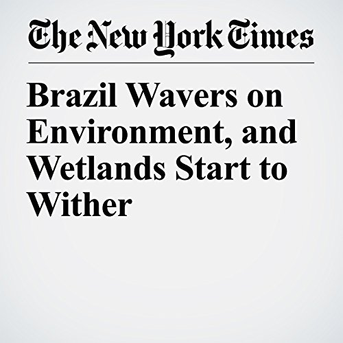 Brazil Wavers on Environment, and Wetlands Start to Wither copertina
