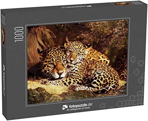 Puzzle 1000 Teile Jaguar Wildkatze Tier Stock Bilder - Klassische Puzzle, 1000/200/2000 Teile, in edler Motiv-Schachtel, Fotopuzzle-Kollektion 'Tiere'