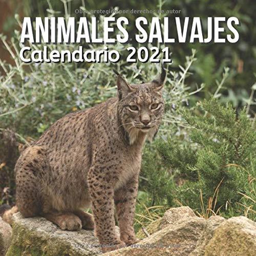 Calendario 2021 Animales Salvajes: Regalos Amantes Animales Para Niños, Niñas, Adultos, Adolescentes, Pages, Madres, Mujer, Hombre, Cumpleaños y Navidad