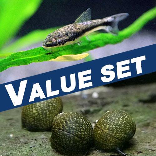 【バリューセット】オトシンクルス(約2.5-3cm)(3匹)+ 石巻貝(約-cm)(4匹)[生体]
