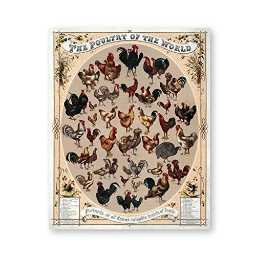 LangGe Quadro su Tela Dipinti 40x50cm Senza Cornice Decorazioni per la casa Vintage Pollame del Mondo Stampa Poster Gallo Gallina Razze Razza Antico Poster Nordico