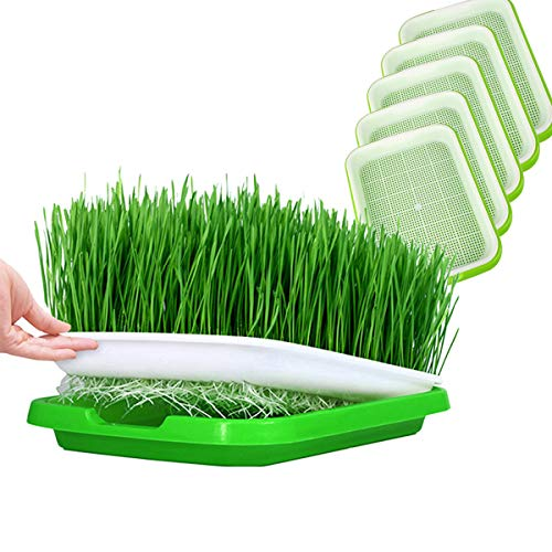 Huntfgold 5 Stück Seed Sprouter Tray Keimschale Sprossen Sämlinge Weizen Grassierer Pflanzer Hydroponics Dauerhaft Samen Keimung Tablett für Garden Home Office