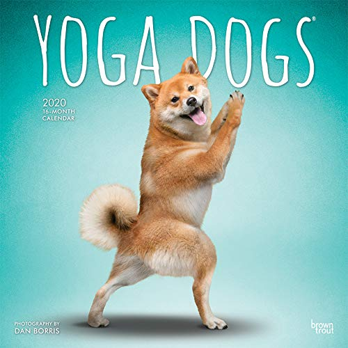 Yoga Dogs 2020 12 x 12 Inch Monthly Square Wall Calendar, Animals Humor Dog (English, French and Spanish Edition)