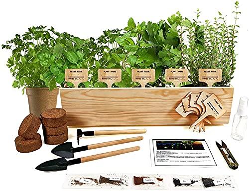 Hand-Mart 5 Herb Seeds Windowsill Herb Garden Kit, Basil Parsley Rosemary Thyme Mint, Including...