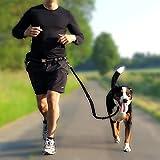 Premium Jogging-Leine | Sichere Metall-Komponenten | Umweltfreundliche Verpackung | Softer Neopren-Bauchgurt | 2 Gratis Booklets | Pets'nDogs - 5