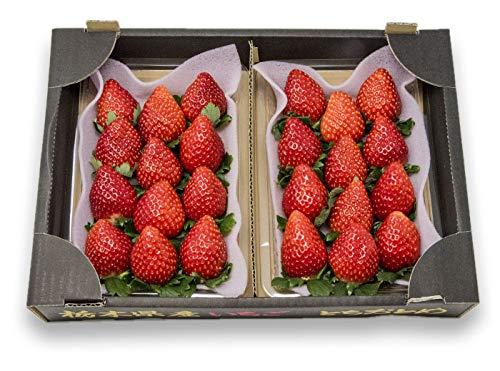 フルーツなかやま 栃木産 とちおとめ いちご DXパック 2パック入 糖度11度以上 1粒20g以上