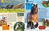 WAS IST WAS Pferde und Ponys: Reiten, Fohlen, Pferdesprache, Turniere, Zucht und Pflegepferd! (WAS IST WAS Edition) - 4