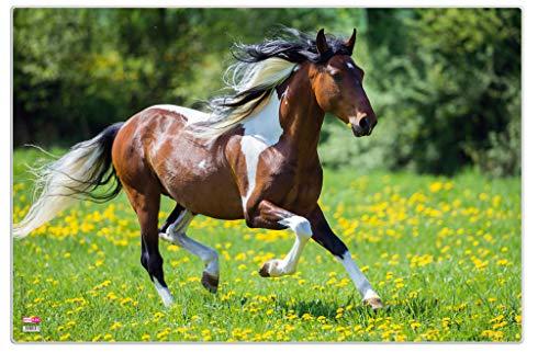 Veloflex 4651089 - onderlegger poster paard 40x60 cm, antislip