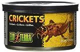 Exo terra Nourriture pour Reptiles Crickets S