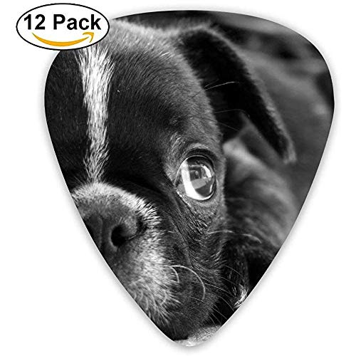 Bulldog Puppy Dog Black White Face Eyes Sadness Gitar Pick 12 stuks