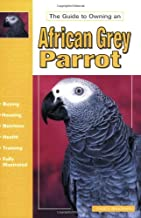The Guide to Owning an African Grey Parrot