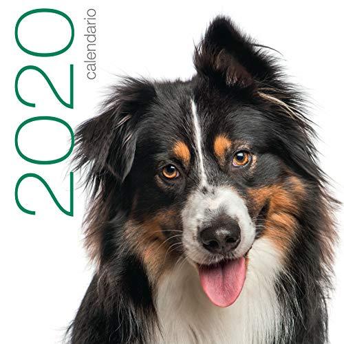 Cani. Calendario 2020 da muro