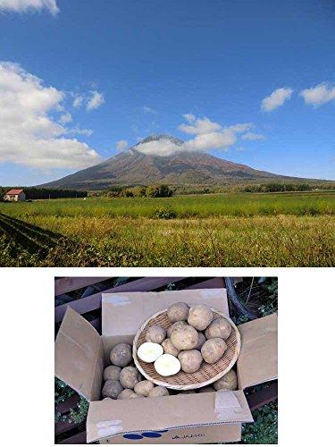 北海道 ようてい産 ( じゃがいも 男爵 )10kg 農地直送 収穫量日本一 宇和海の幸問屋