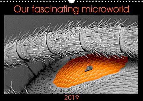 Our fascinating microworld (Wall Calendar 2019 DIN A3 Landscape): Encounter with our tiny neighbours (Monthly calendar, 14 pages ) (Calvendo Science)