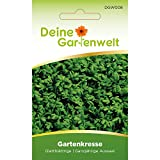 Kresse Samen (Großblättgrige Gartenkresse) | Kressesamen | Saatgut für Kresse-Pflanzen | Kräutersamen