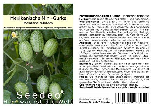 Seedeo® Mexikanische Mini-Gurke (Melothria trilobata) ca. 20 Samen BIO
