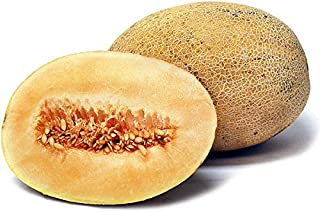 30+ ORGANICALLY Grown Israeli Ananas Pineapple Cantaloupe Melon Seeds, Heirloom Non-GMO, Extra Sweet, Fragrant, Rare, from USA
