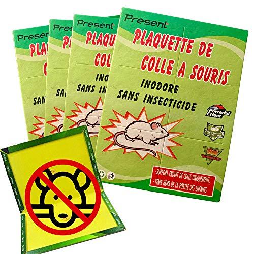 Present   4 Plaques ultra collante pour souris et rats, piège à glu pour souris et Rats professionel, Piège collant, Piège à rat, piege a souris,   Taille 21*31cm