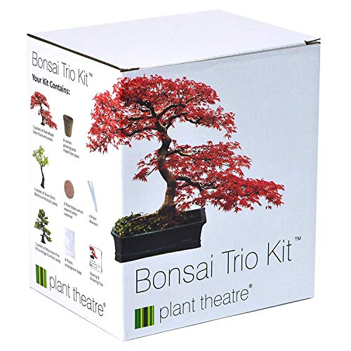 3distintivi bonsai da coltivare
