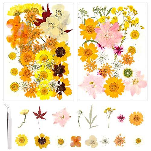 metagio 61 Stück Gepresste Blumen Natürliche Getrocknete Blumen Gemischte Getrocknete Blätter, Gemischt Getrocknete Echt-Blumen für Kunst Basteln DIY Harz Scrapbooking Handwerk mit 1 Pinzette (Gelb)